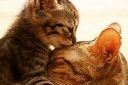 かわいい姿に胸キュン! 愛らしいコロコロ系の子猫たち 画像10選