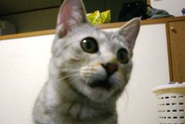 フシギ発見? かわいくておもしろい、謎な行動をする猫 画像10選
