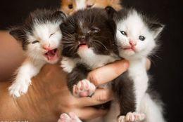 子猫が生まれました! かわいくないわけがない赤ちゃんニャンコ 画像10選