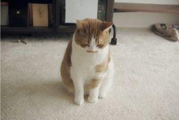 喜怒哀楽、全部がかわいい! 猫ちゃんたちの様々な表情 画像10選