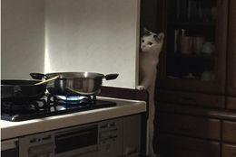 【目撃情報】リアル泥棒ネコ?!  家で見つけたかわいすぎるネコちゃん達 画像10選