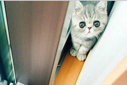兄ネコに出口を塞がれて戸惑う妹ネコが反則級のかわいさ