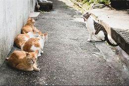 【爆笑】笑わせてくる! おもしろかわいいネコ達 画像10選
