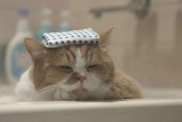 お風呂でのんびりと! 気持ちよさようにお風呂につかるネコ達 画像10選
