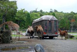 大学生に聞いた! この夏行きたい、全国各地の動物園ランキングTop5!