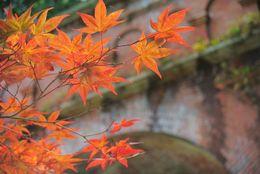 大学生が選ぶ、秋に旅行したい都道府県ランキング! 5位山梨
