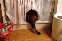 後ろ姿にキュン! ふわふわもふもふ、かわいいネコのお尻姿 画像10選