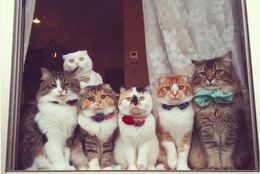 みんなで大集合! レトロキュートでかわいいネコの群れ 画像10選