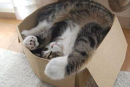 健気な顔に胸きゅん! 見ているだけで癒されるかわいいネコ 画像10選
