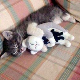 ぎゅーっと! ぬいぐるみが大好きな、かわいいネコ達 画像10選