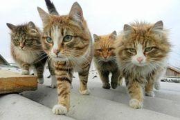 とってもなかよし! かたい絆で結ばれたネコ達 画像10選