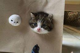 一緒に連れて行って! バッグにすっぽり入ったかわいいネコ 画像10選