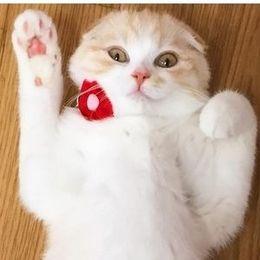 たまらなく幸せ! 29日にちなんでネコさんの肉球 画像10選