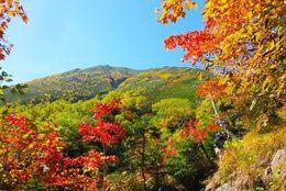 大学生に聞いた、紅葉を見に行きたい名所ランキング! 3位清水寺