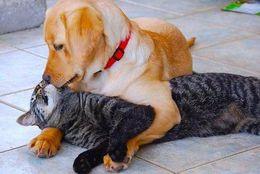 あつあつが伝わってくる! 仲むつまじい、ラブラブすぎる犬ネコ 画像10選