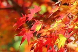 秋デートで行きたい! 都内のおすすめ紅葉スポット5選