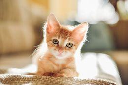 大当たり作品多し! 癒されるかわいいネコの漫画10選