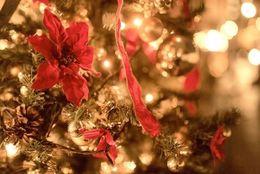 クリスマスプレゼントにほしい!女子大生が憧れるクリスマスコフレのブランドランキング!