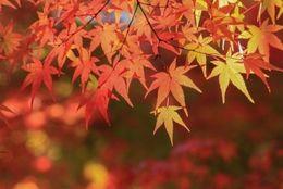 今週末もお出かけ日和! この秋紅葉を見に行く大学生は約4割