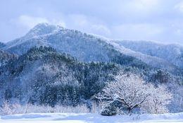 紅葉の次はこれ! 大学生が雪景色を見に行きたい都道府県ランキング!