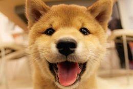 【悶絶注意】いやされまくる可愛い犬の画像100選