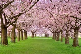 今年の春、一緒にお花見したい芸能人ランキング! 2位ブルゾンちえみ