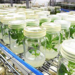 【理系研究室訪問】千葉大学園芸学部植物細胞工学研究室に潜入! 教授と学生に研究・ゼミについて聞いてみた【学生記者】