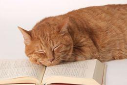 【資格ゲッターズのオススメ資格集】猫好き必見! かわいいだけじゃない「ねこ検定」【学生記者】