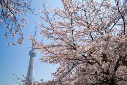 全国の桜の名所ランキング2018 ! この春、見所のおすすめ桜スポットを紹介