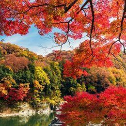 関東のおすすめ紅葉スポット10選! 秋の名所にお出かけしよう