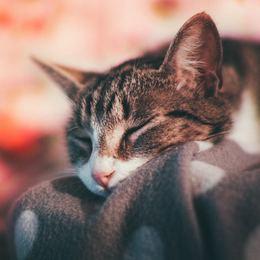 もふもふに癒される、必見の猫映画たち