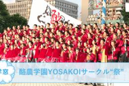 """【酪農学園YOSAKOIサークル""""祭"""" @北海道】を紹介!一緒によさこいを踊ろう!#春からFES2021"""