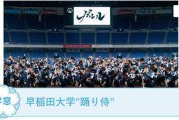 """【早稲田大学""""踊り侍"""" @東京】を紹介!日本全国のイベントでよさこいを踊って、感動を与えよう!#春からFES2021"""