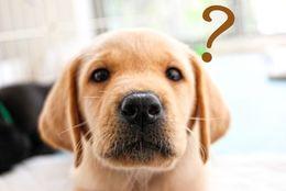 もしあなたが犬だったら? ワンちゃん性格診断