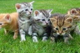 もしあなたが猫だったら?ネコちゃん性格診断