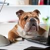 面接で「自分を動物で例えると何?」と聞かれたら、なんて答える?  診断してみよう!【自己PRの解説つき】