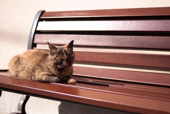 ぼっちでも快適に過ごすためのベンチ6選@戸山キャンパス