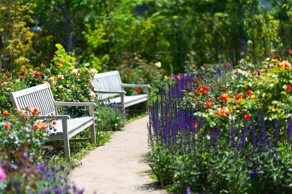 【Q&A】昼休みに大隈庭園にてランチをしたいんですが、silsの学生が騒いでいることが多くて優雅な時間を過ごせません。どうしたらいいですか?