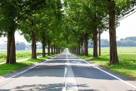 【Q&A】所沢キャンパスってトトロの森みたいとか夏はめちゃくちゃ暑いとか虫がうじゃうじゃいるとか聞いたんですけど、何か良いところあるんですか?