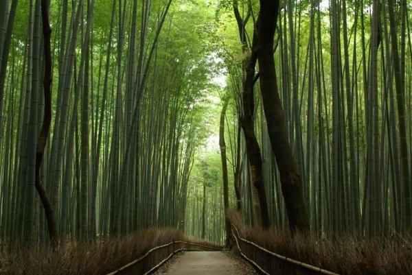 【国内卒旅ランキング】京都の魅力・おすすめ情報