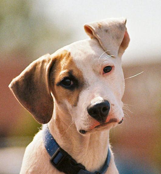 気になる犬種で性格がわかる..だと...!? ブリードと飼い主の性格との関連性