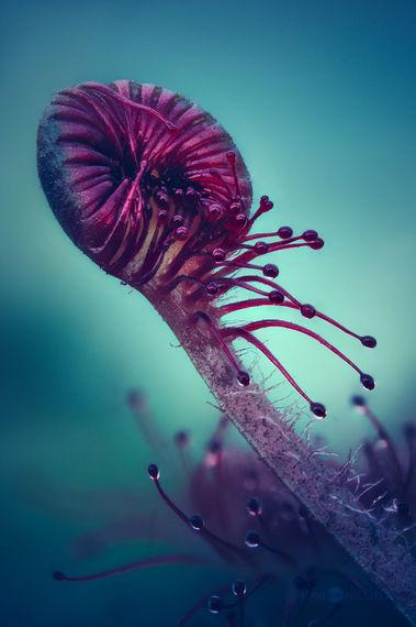 【米国発】見入ってしまう……目がはなせないほど美しい「食虫植物」