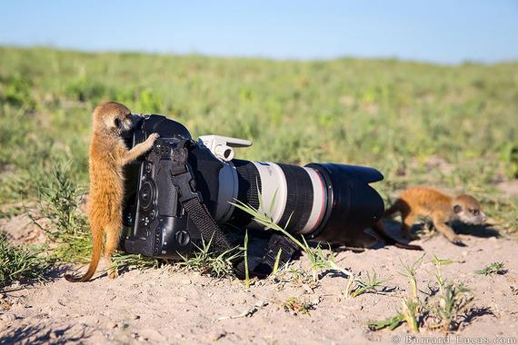 かわいすぎる! 逆に写真をとってくれる(?)8匹の動物カメラマン