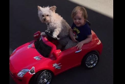 世界一かわいいドライブ!?犬と子どもの素晴らしい連携プレーから目が離せない