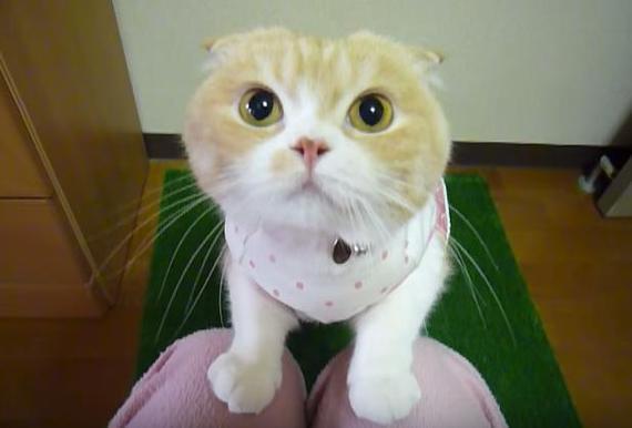 もー!抱っこしてよー!とせがむ猫をじらしたら逆ギレされたがそれすら可愛い動画
