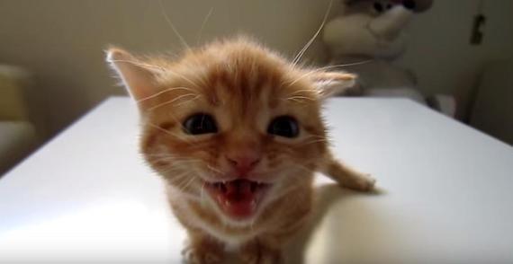 勢いよく鳴いていた子猫が、お隣の猫に叱られてしょぼんとする姿が可愛すぎる