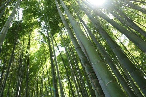 鎌倉に旅行するなら絶対行くべきオススメ人気観光スポット14選