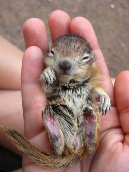 ミニサイズ! 人間の手のなかにすっぽりおさまった動物の赤ちゃん写真8枚