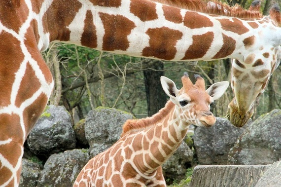 静岡のおすすめデートスポット15選!カップルで行きたい人気観光地は?