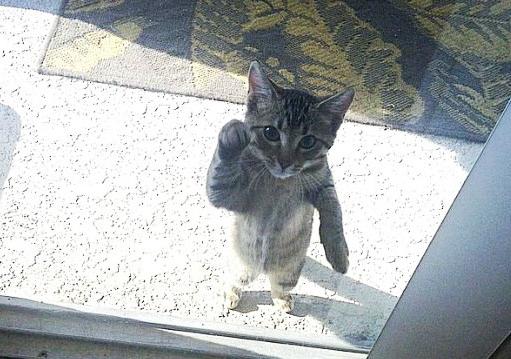 おうちに入れて~! 一生懸命おねだりするネコちゃんたち 写真9枚